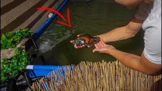 Putting FISH into My POOL POND!!!