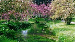Coronavirus, i Giardini di Ninfa sono chiusi ma la visita virtuale mostra le prime fioriture