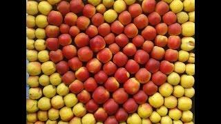 Как быстро сделать яблочный уксус