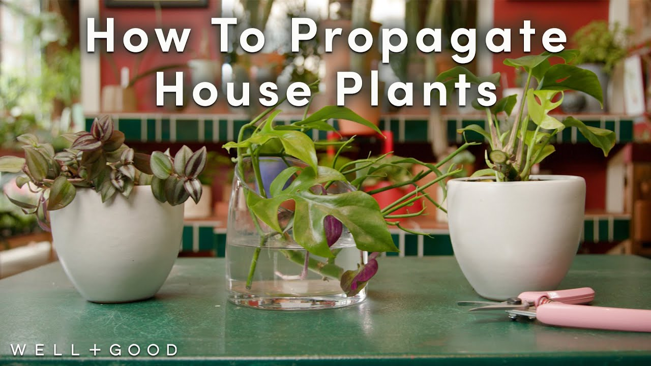 How To Propagate, and Tips for Aftercare | Greene Thumb | Well+Good