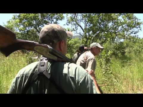 Dallas Safari Club's Tracks Across Africa - Double Buffalo in the Valley
