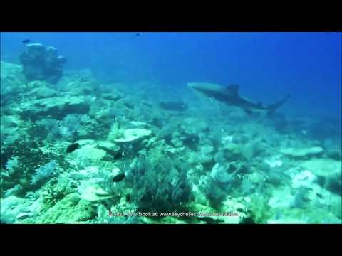 Seychelles: Diving off Aldabra and the Outer Islands