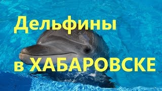Дельфины. Шоу дельфинов в Хабаровске.