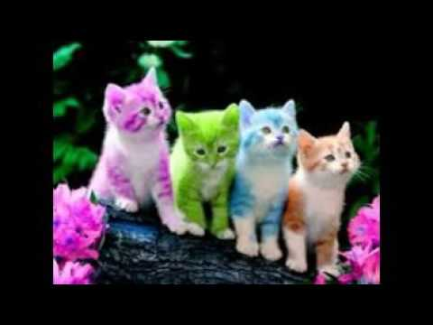 Cute White Kittens With Blue Eyes Wallpaper Wallpapers Free Download For Mobile Youtube