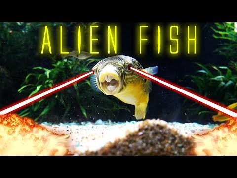 ALIEN FISH EATS LIVE CRABS!