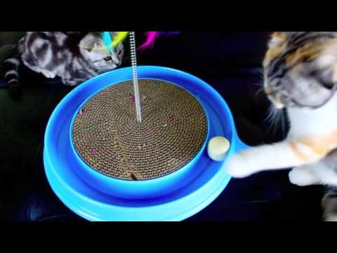 Scottish Fold Luxury Kittens Turbo Toy Scratcher for Cats