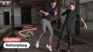 Hoe Nederland naar de ratten gaat