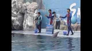 โลมาโชว์ ซาฟารีเวิลด์ (Dolphin Show at Safari World) Thailand