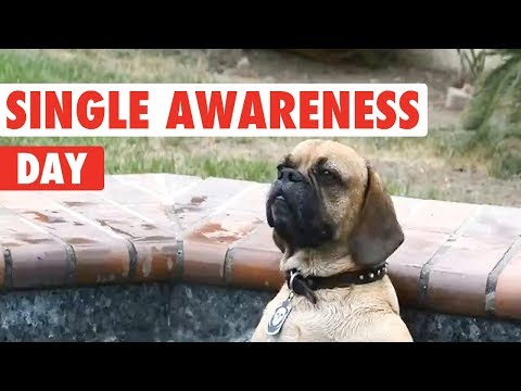 Forever Alone Pets | Happy Singles Awareness Day
