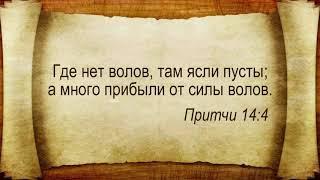 Андрей Бердышев    Духовная дисциплина христианина. Серпухов