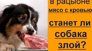 если собаке дать мясо с кровью, то она  будет злая