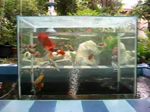 My open bottom fish youtube for Fish tank vs pond