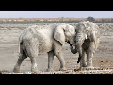 African Elephant Folklore Love Story