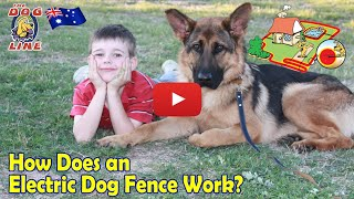 Electric Dog Fence Review