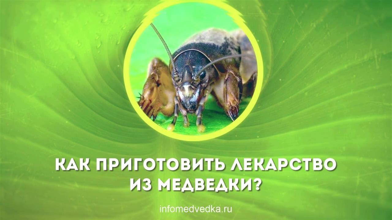 как приготовить лекарство от паразитов из лисичек