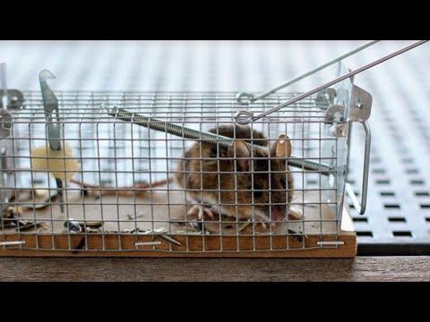 Die Beste Mausefalle Maus Lebendig Fangen Mousetrap Mouse