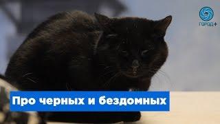 Черные коты в счастливые руки