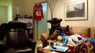 Furry Commercial - Takoda