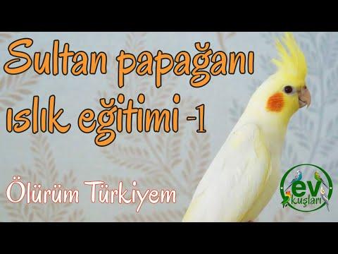 Sultan Papağanı  Ölürüm Türkiyem  Islık Eğitimi Dinlet 10 Dakikalık
