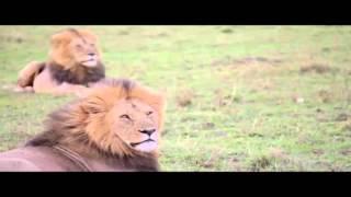 Safari Kenya 2012
