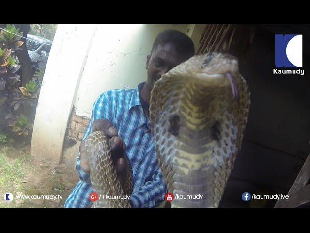 Cobra & Giant Rat Snake in Central Jail !! Vava Suresh came to Rescue | SNAKE MASTER