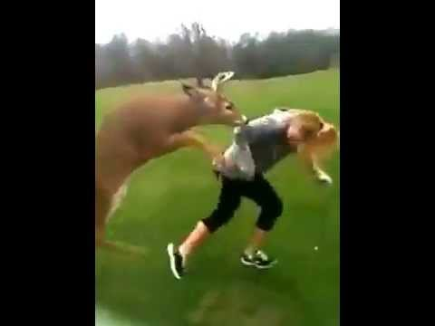 Deer Tries to make love with girl