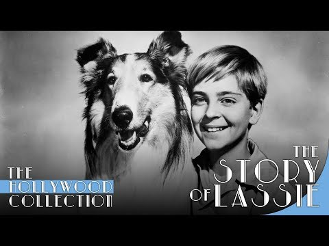 the story of lassie   youtube