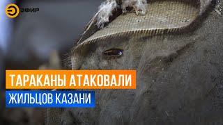 В Казани тараканы оккупировали многоэтажку на проспекте Ибрагимова