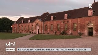 ANIMAUX : Le haras National du pin, entre tradition et passion