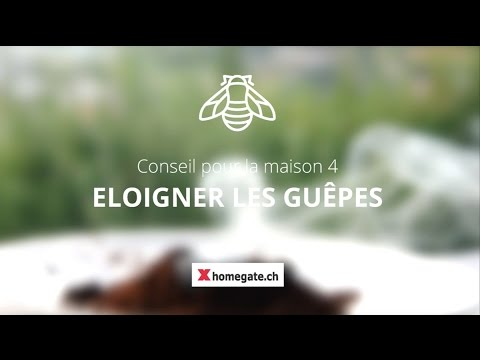 conseil pour la maison 4 eloigner les gu pes youtube. Black Bedroom Furniture Sets. Home Design Ideas