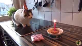 Смешные коты!!! ,кошачий рэп, Funny cats, Прикольные, ржачные,веселые коты,кошки ,котята1