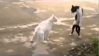 Evolved Cat Funny Animal Videos 2014