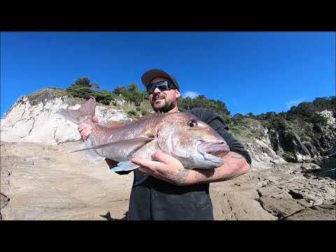 Huge Snapper Off The Rocks Using My Secret Bait