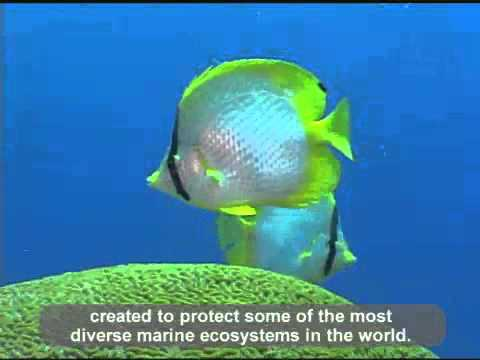 Flower Garden Banks National Marine Sanctuary Youtube
