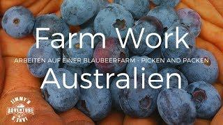 Farm Work- Australien- Blueberry Picking - Vlog #14