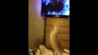 Кот лошара упустил воздушный шара