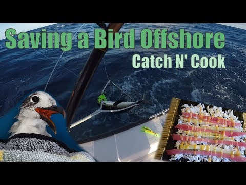 Saving a Bird Fishing Offshore | Key Largo Catch N Cook