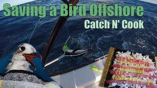 Saving a Bird Fishing Offshore   Key Largo Catch N Cook