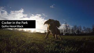 English Cocker Spaniel In The Park | Gopro Hero4 Black