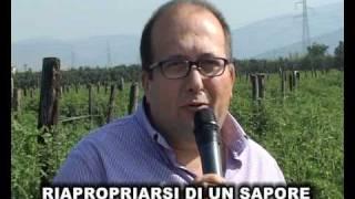 ECCELLENZE CAMPANE - POMODORO SAN MARZANO D.O.P.