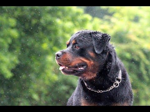 Lexington, Kentucky - Dog Boarding and Training