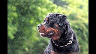 Lexington, Kentucky  Dog Boarding and Training