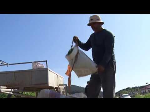 Të jetosh prej mëllagës - Top Channel Albania - News - Lajme