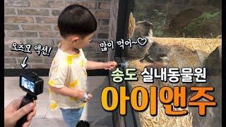 오즈모액션|육아로그| 인천 송도 실내동물원 아이앤주(I…