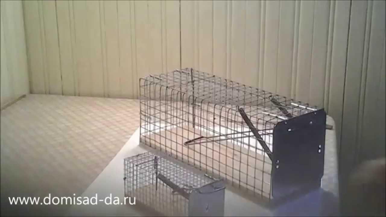 Как сделать капкан для крыс