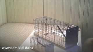 Ловушка от крыс и мышей (инструкция)