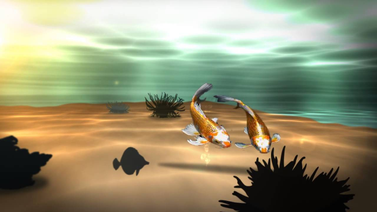 Interactive 3d Aquarium Live Wallpaper Koi 3d Fish Pond Live Wallpaper Youtube
