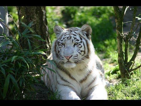 Delhi Zoo - A Day In Delhi Zoo I With White Tiger I
