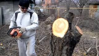 Пилим дерево, не забыв при этом дунуть )))(, 2015-07-13T09:53:08.000Z)