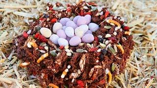 Chocolate Bird's Nest Recipe - Easter Ideas